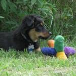 Puppy-016a.jpg