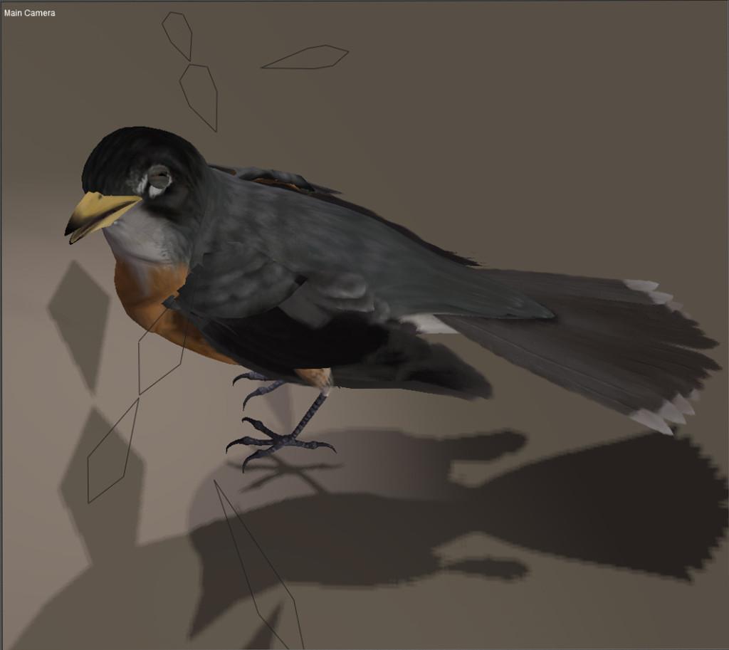 Bird_texture_robin