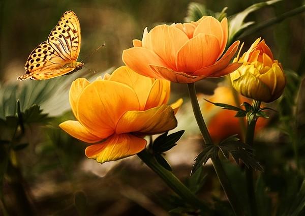flowers-19830_640